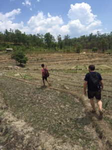 Trekking through the dry rice paddies