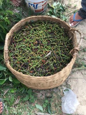 Kampot Pepper Basket
